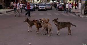Photo of الكلاب الضالة تؤرق سكان جماعة ايت يدين
