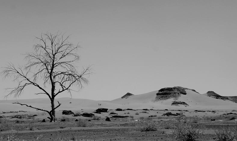 Photo of الجفاف الطبيعي قدر الله والتوزيع العادل لدعم وزارة الفلاحة سيقي الفلاحين من شر ما خلق