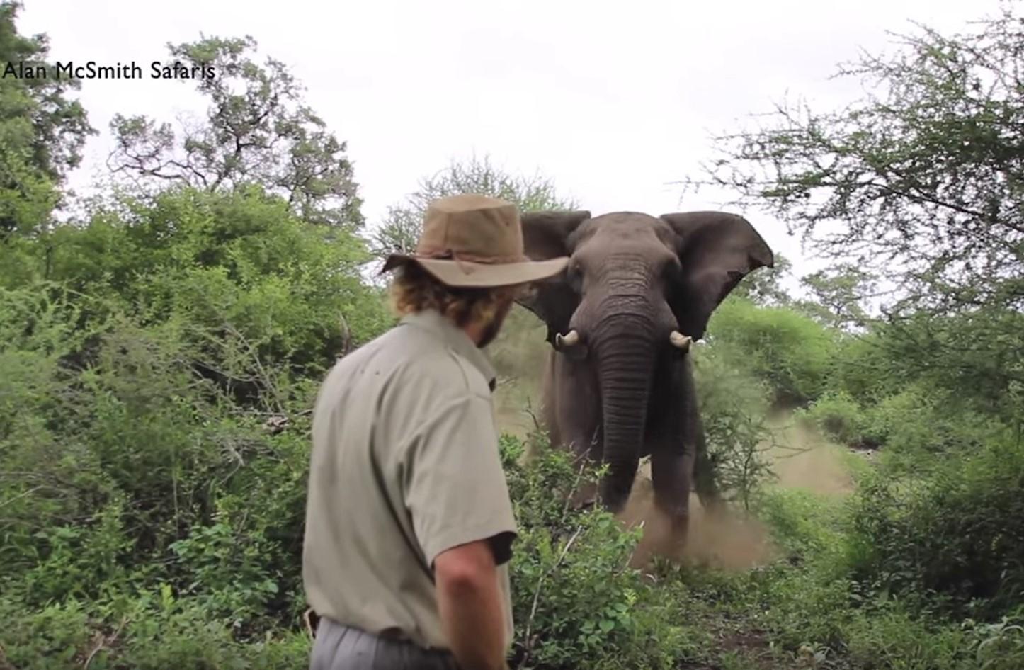 Photo of فيل يصاب بالرعب أمام رجل بدون سلاح ..!