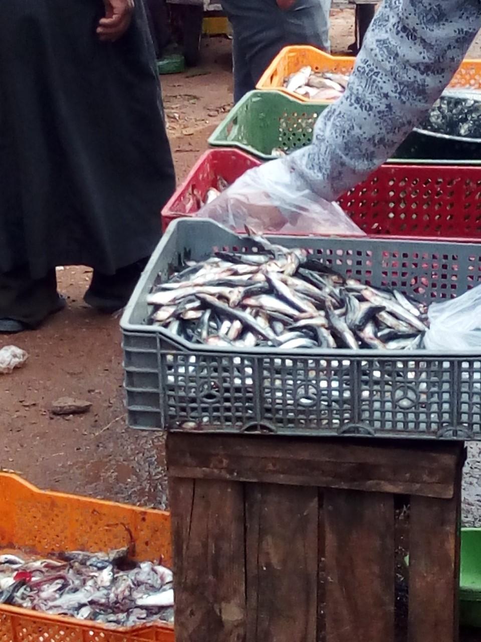 Photo of أسماك متعفنة تباع بسوق تيغسالين