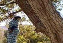 Photo of صــادم / سيدة في عقدها الثالث تنهي حياتها شنقا بواسطة حبل معلق بجدع شجرة