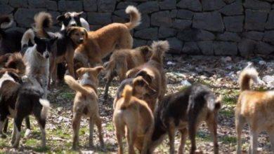 Photo of خنيفرة / الساكنة تشتكي من ظاهرة الكلاب الضالة