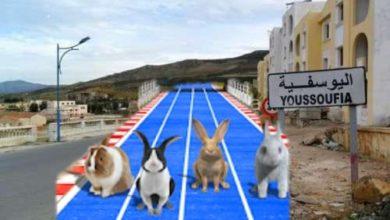 Photo of أرانب سباق تستعد هذه الأيام بإقليم اليوسفية ..!