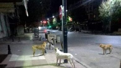 "Photo of أزرو / 12 حالة ضحية ""عض"" الكلاب المسعورة"