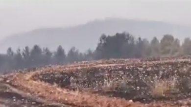 Photo of إقليم إفران/ النار تلتهم 6000 هكتار من الغطاء النباتي