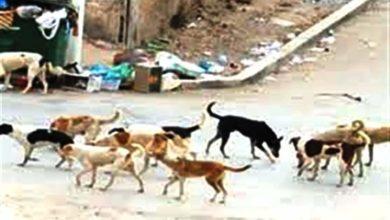 Photo of مريرت /عودة ظاهرة انتشار الكلاب الضالة